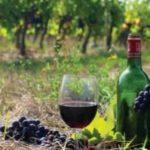 Посещение виноградников