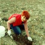 Посадка винограда в Форт - Раевский